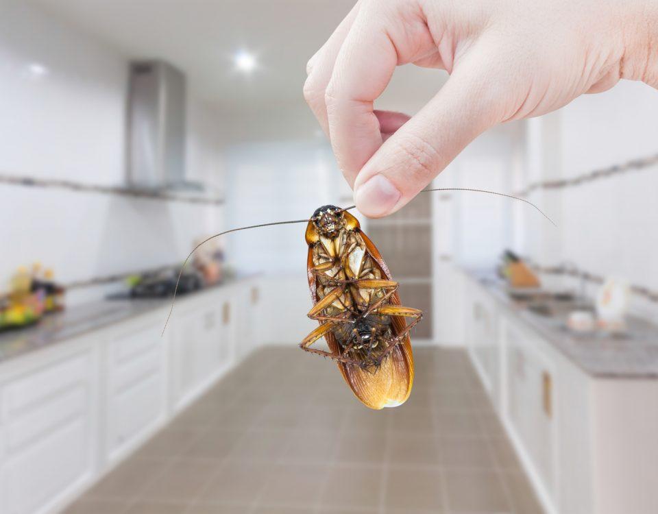 Zwalczanie owadów - Zwalczanie pluskiew- Zwalczanie karaluchów - Zwalczanie korników - Zwalczanie insektów - Dezynsekcja - Fumigacja - Usuwanie pluskiew, kaZwalczanie owadów - Zwalczanie pluskiew- Zwalczanie karaluchów - Zwalczanie korników - Zwalczanie insektów - Dezynsekcja - Fumigacja - Usuwanie pluskiew, karaluchów i kornikówraluchów i korników